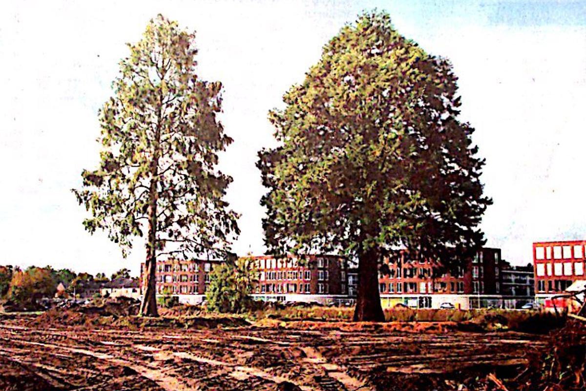 ORGA architect bomen verhuizen 01