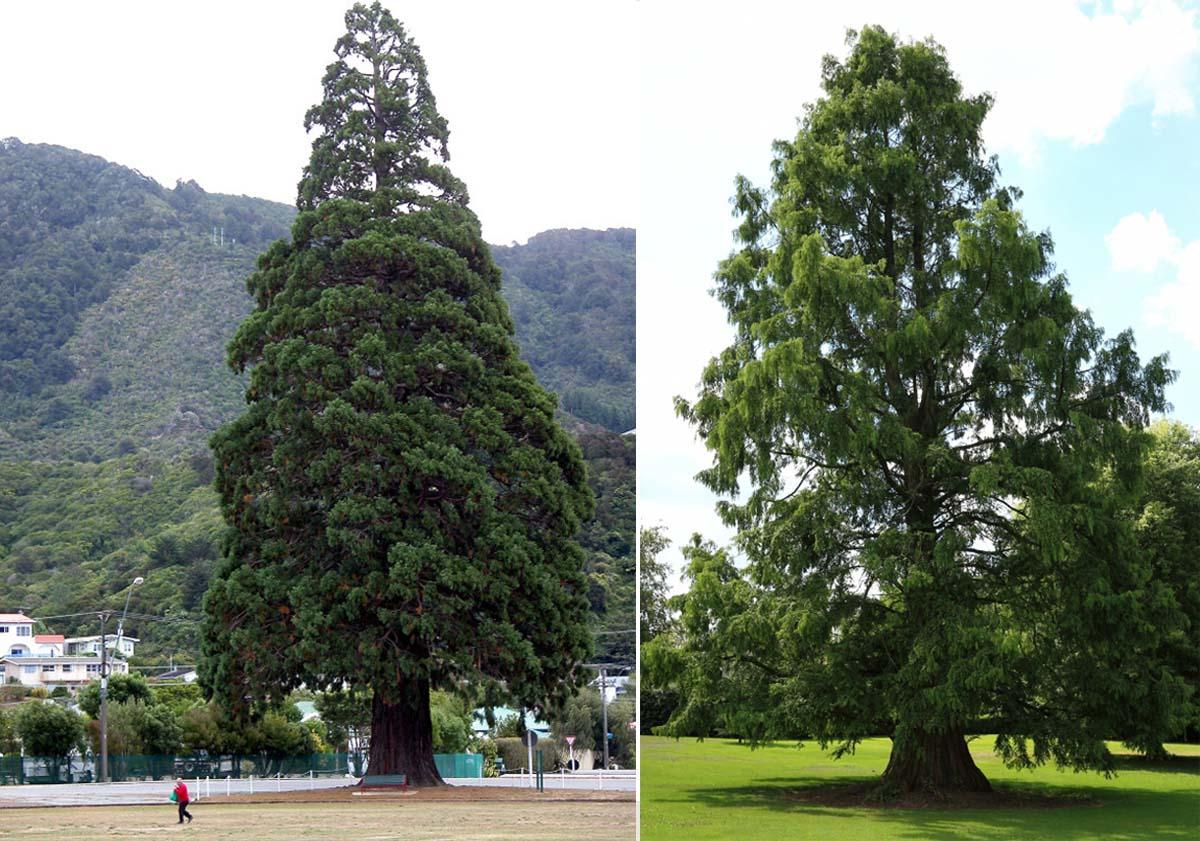 ORGA architect bomen verhuizen 03