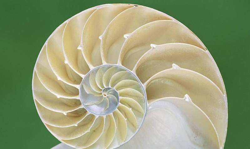 shell-1920-1080-wallpaper
