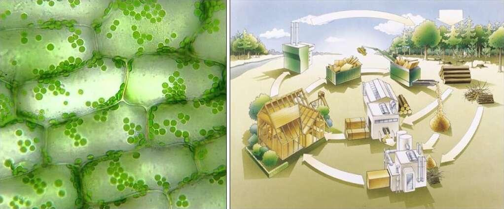 Biomimicry 006