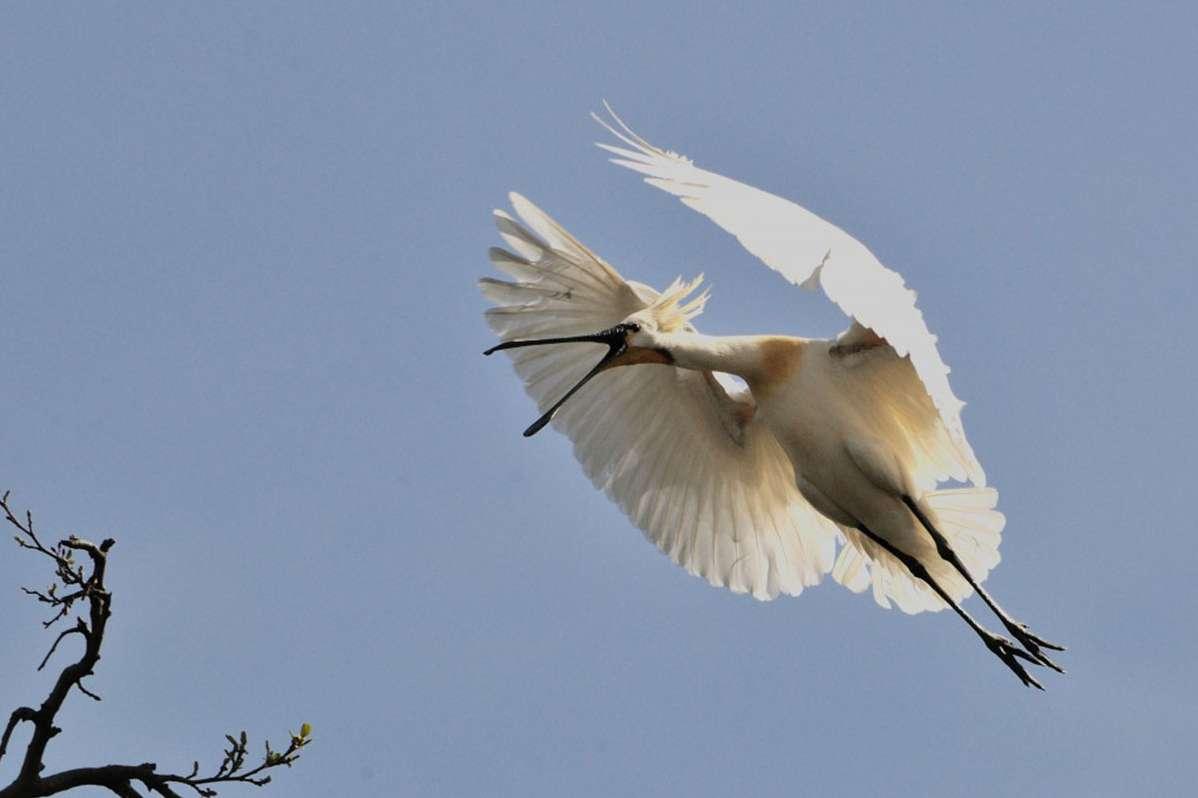 birds-eye-011
