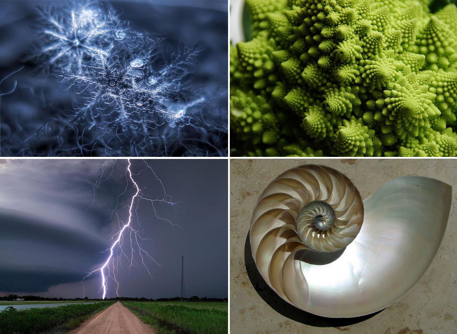 4 Fractals Natuur
